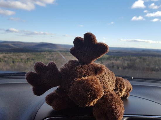Wilmington, VT: My travel companion, Jesse, was the only moose we saw on this trip! :)