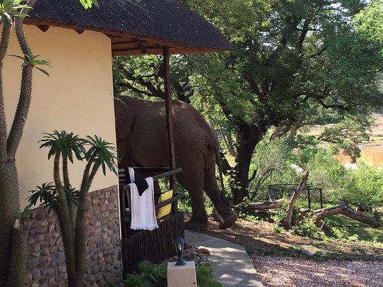 Balule Nature Reserve, Afrique du Sud : photo0.jpg