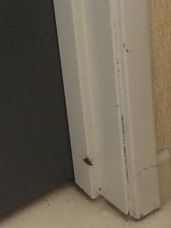 Tilt Hotel Universal / Hollywood, an Ascend Hotel Collection Member: Yep, definitely a cockroach.