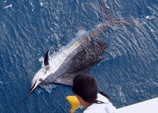 Picture of old hat deep sea fishing charters for Deep sea fishing charters