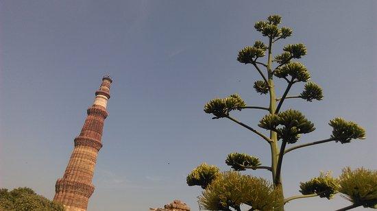 Qutb Minar: IMAG0232_large.jpg