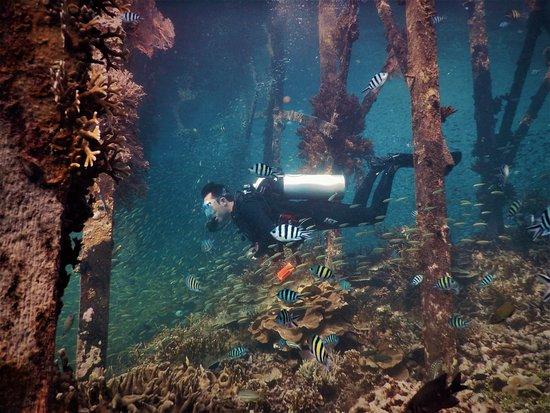 Diving Ocea