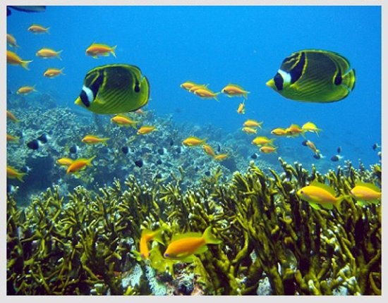 Pwani Mchangani, Tanzania: Snorkeling  Enjoy yourself with snorkeling as Indian ocean boast of its exotic coral reefs, attr