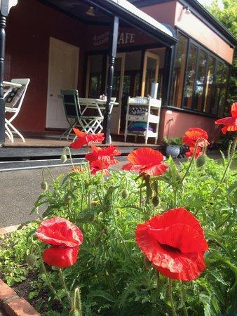 Queenscliff, Australien: garden