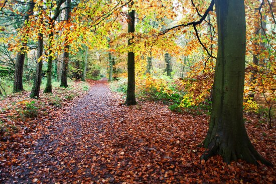 Skipton Castle Woods