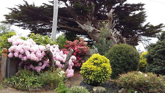 St Marys, Australië: Garden in spring