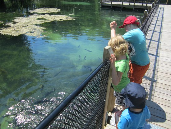 The Oden State Fish Hatchery: feeding the fish