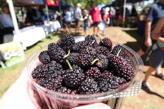 Toowoomba, Australia: Fresh mulberries