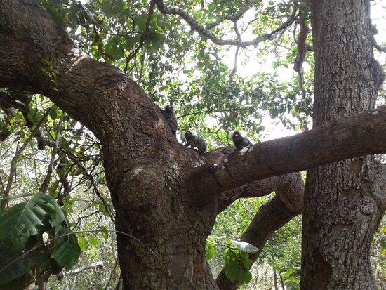 Каукайя: encontramos alguns animais nas trilhas.