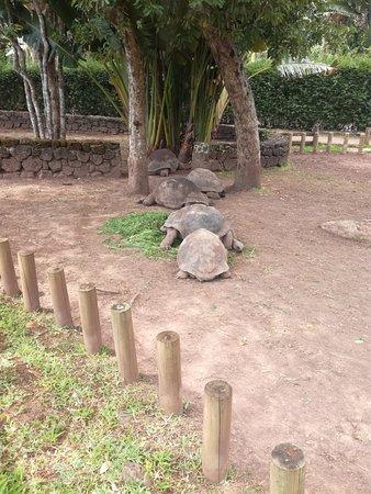 Chamarel: Żółwie :).
