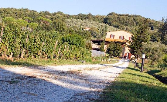 Castagneto Carducci, Italië: L'entrata dell'agriturismo