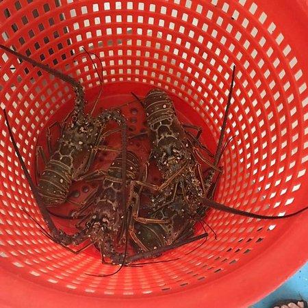 Casamar seafood market tavernier restaurant reviews for Key largo fish market