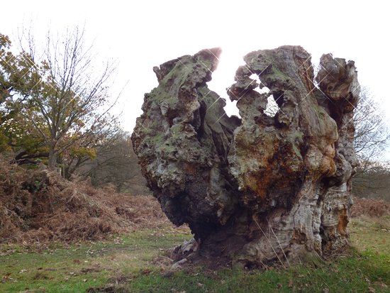 Richmond-upon-Thames, UK: Interesting tree stump in the park