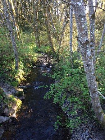 Salmon Creek Park 사진