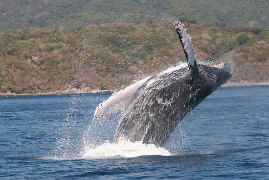 J World San Diego: Whale in Banderas Bay, Puerto Vallarta