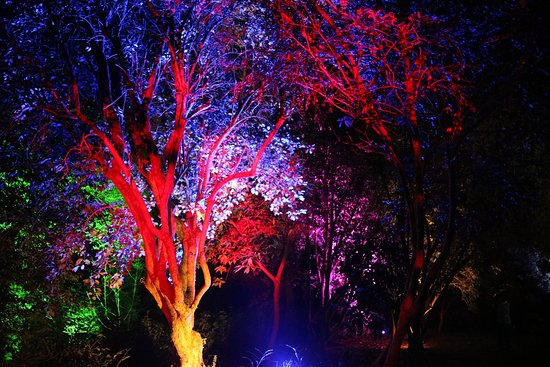 Image result for illuminated saltram