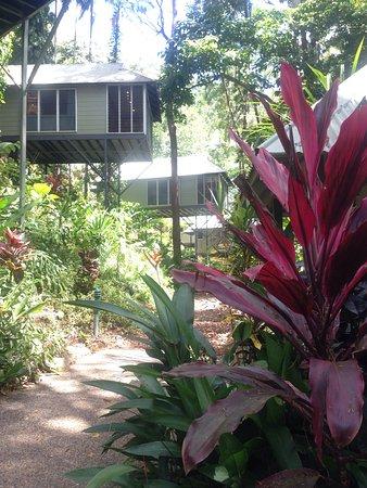 Daintree EcoLodge & Spa: photo1.jpg
