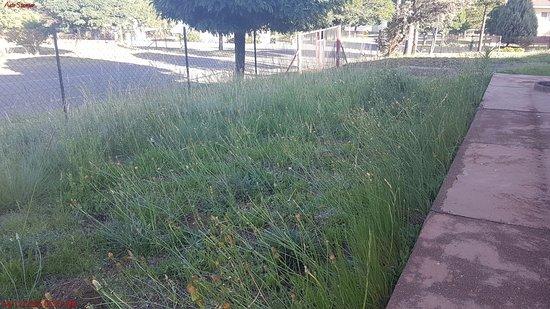 Bokong, Lesotho: Garden weeds