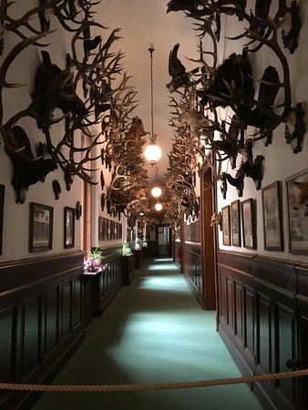 Bohemen, Tsjechië: The hunting trophies of the Archduke