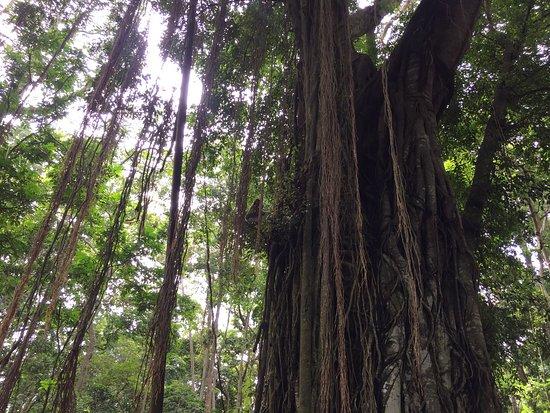 Komaneka at Monkey Forest: photo7.jpg