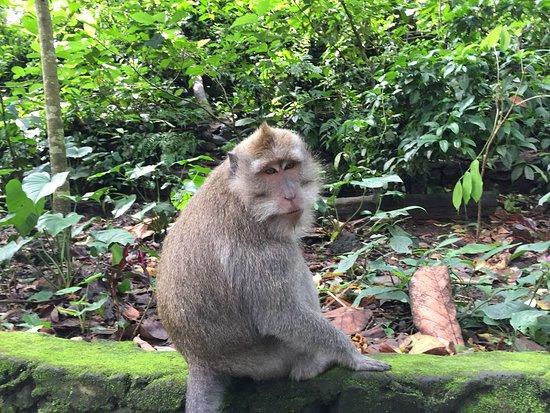 Komaneka at Monkey Forest: photo8.jpg