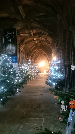 Chester Cathedral: Local Schools Christmas trees
