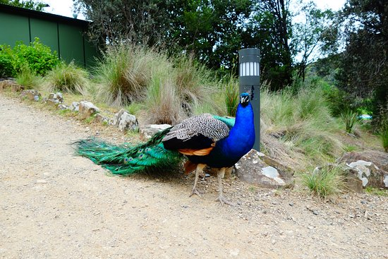 Launceston, Australia: 近い、そして美しい