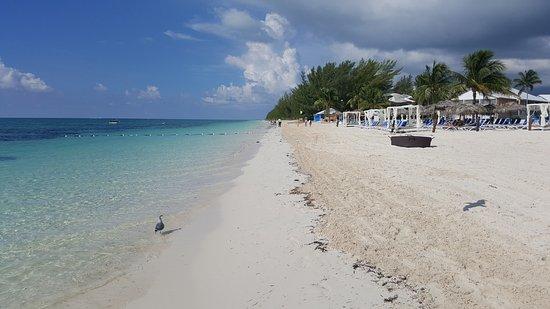 Picture Of Viva Wyndham Fortuna Beach