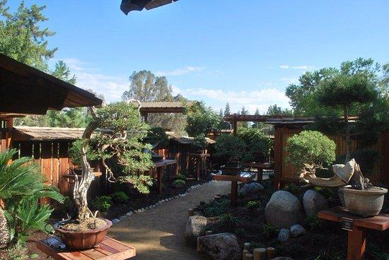 The Bonsai Garden Picture Of Shinzen Japanese Garden Fresno Tripadvisor