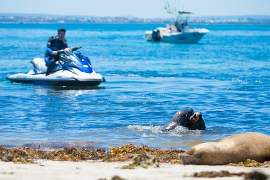 Dolphin Spotting Garden Island Picture Of Jet Ski Tours Perth