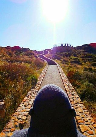 Cape Naturaliste, Australien: Sugarloaf Rock 1_large.jpg