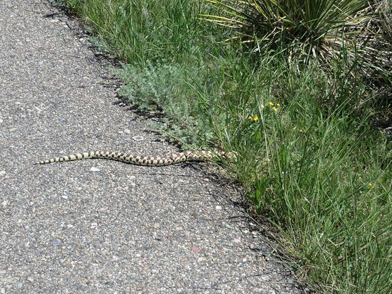 Gering, NE: Snake crossing trail
