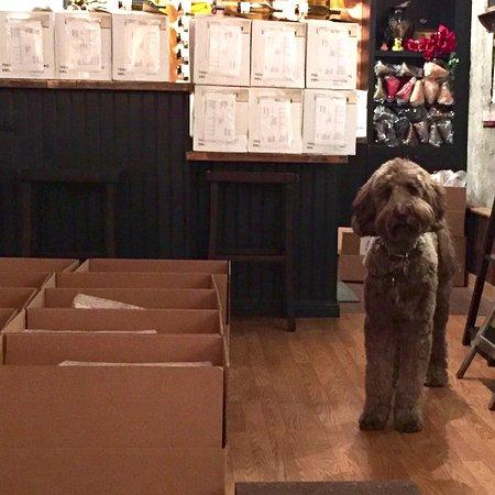 Healdsburg, Kalifornia: Vineyarddoodle working on Clubmueller orders.