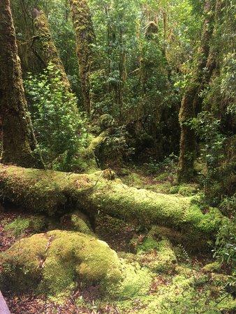 Strahan, Australien: photo1.jpg