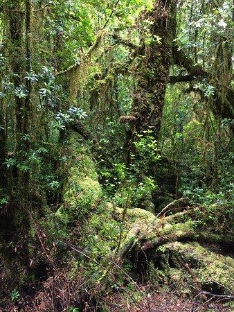 Strahan, Australien: photo3.jpg