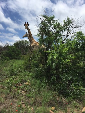 KwaZulu-Natal, South Africa: photo3.jpg