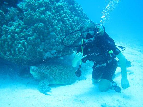 Lady Elliot Island, Australia: Dive with turtles