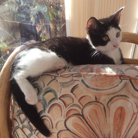 Amberley, UK: Assorted pets