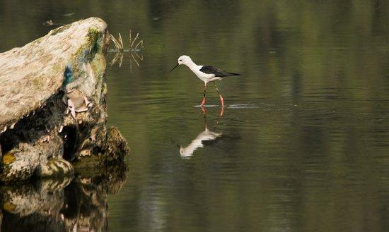 Surajpur Bird Sanctuary