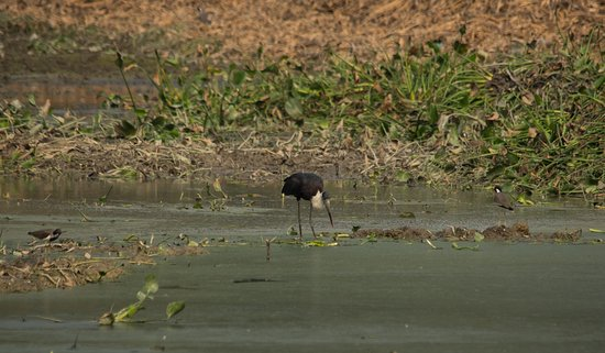 Greater Noida, India: Stork?
