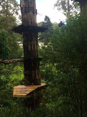 Belgrave, Australia: Quite high up