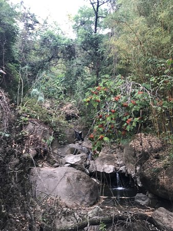 Reserva Natural Atitlan: This is in the reserve! There are plenty of beautiful things to look at, especially on the zipli