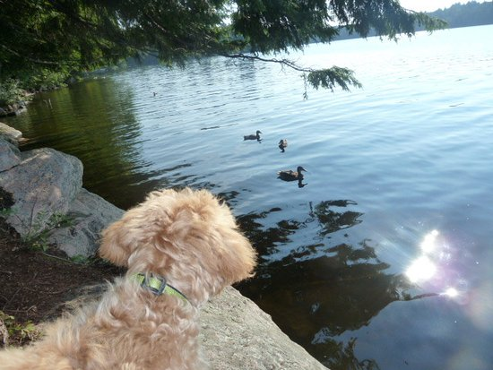 Moffitt Beach: Ducks and puppy