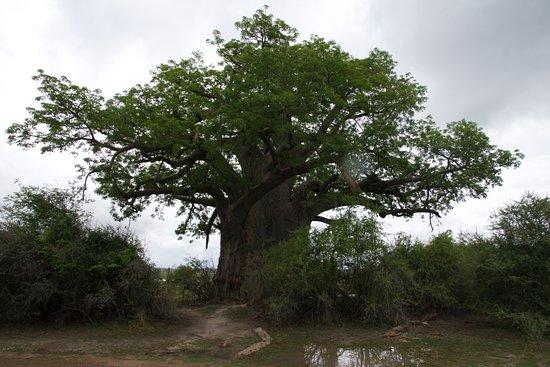 Caprivi Region