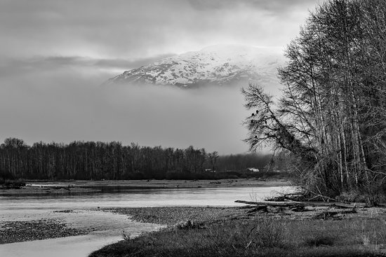 Haines, AK: Eagles perched above the Chilkat River.