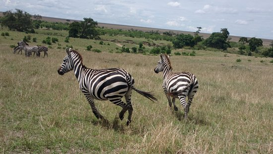 Neslo Tours and Travels Day Tours : just 2 friendly Zebras