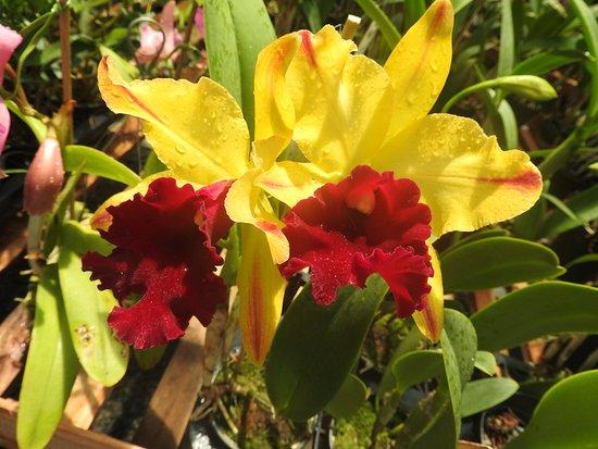 Orquidario Nego Plantas