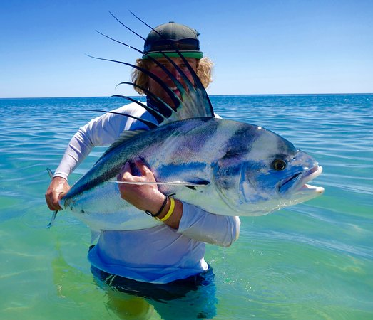 Los Barriles, Mexico: fly caught trophy roosterfish with Pursuit Anglers guide Joshua Martz