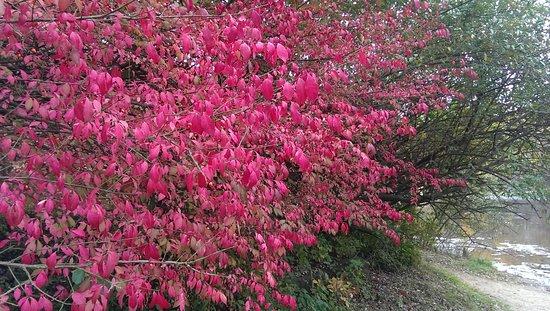 Eagle Creek Park: Fall leaves