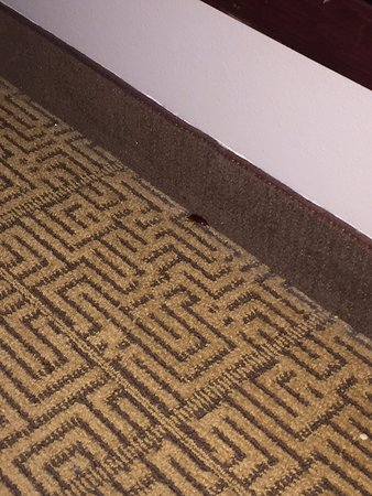Hyatt Place College Station: A roach found in the room!!
